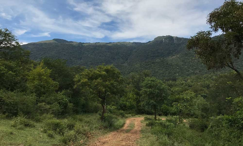 Biligiri Rangana Hill