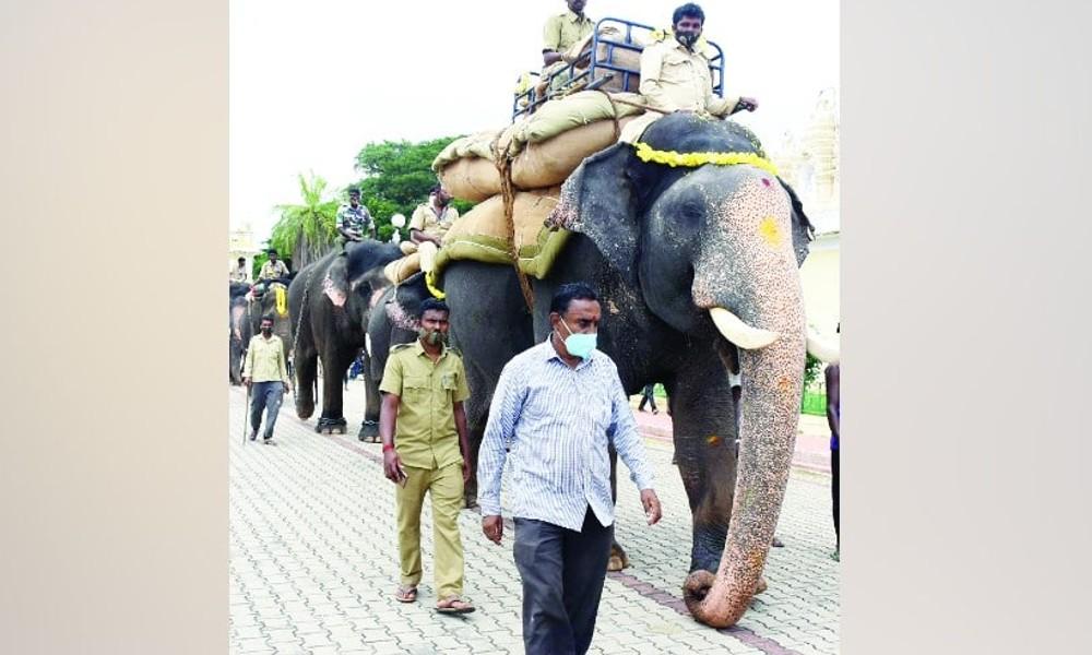 500 ಕೆಜಿ ಭಾರ ಹೊತ್ತು ಸರಾಗವಾಗಿ ಹೆಜ್ಜೆ ಹಾಕಿದ ಗಜಪಡೆ ನಾಯಕ ಅಭಿಮನ್ಯು